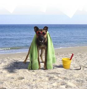 cane-spiaggia_643x654[1]