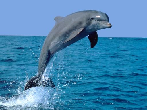 delfino[1]