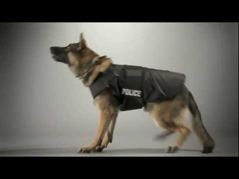 cane-poliziotto[1]
