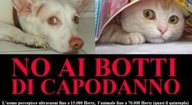 cani-gatti-botti3[1]