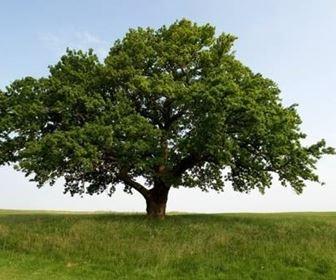 alberi_H1